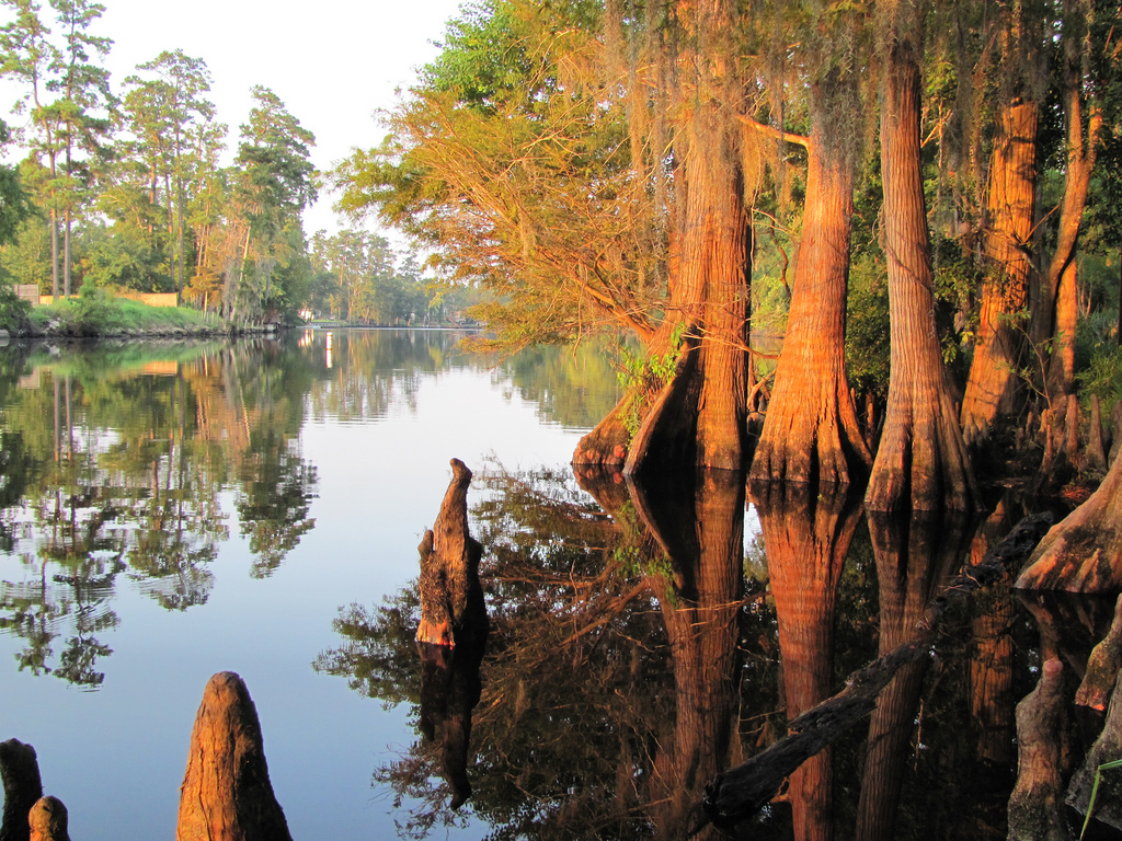 Top 3 Louisiana State Parks